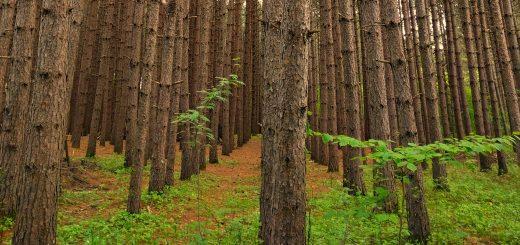 Trees Short
