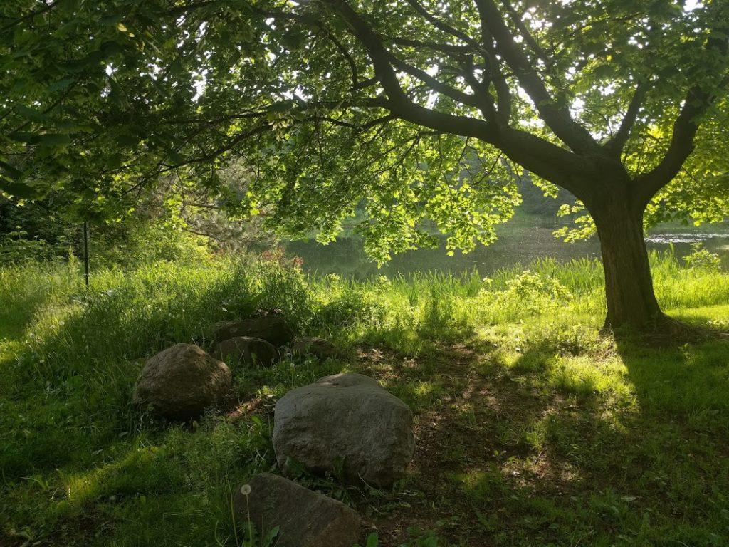 Bagley Tree